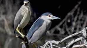 birdwatching_sardegna_foto.jpg